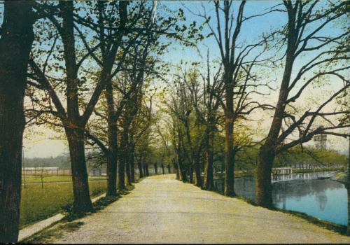 Krumlovské stromořadí