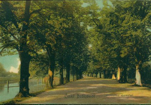 Krumlovské stromořadí (1909)